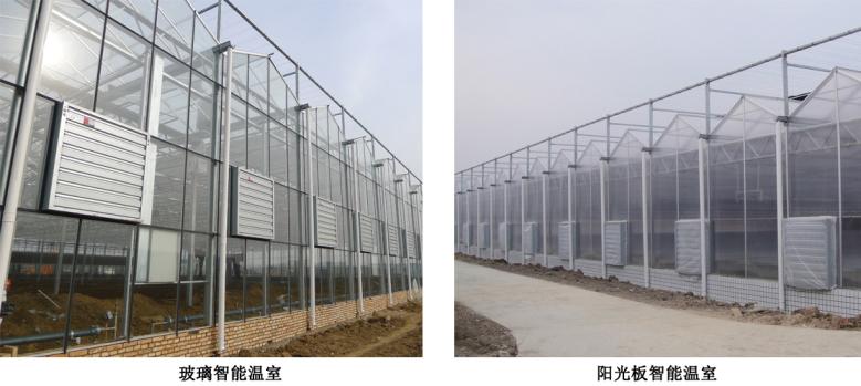 玻璃智能温室、阳光板智能温室