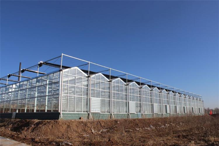 温室大棚在建设过程中有哪些技巧需要注意?