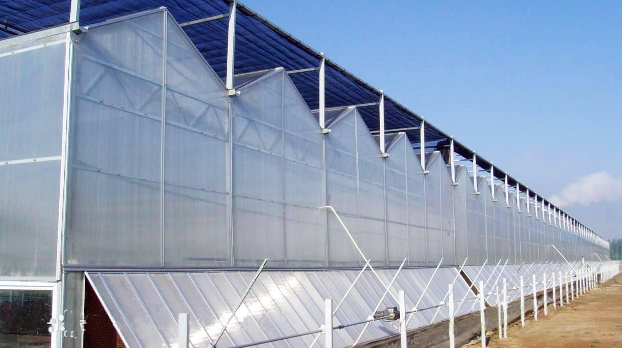 阳光板连栋温室温室.jpg