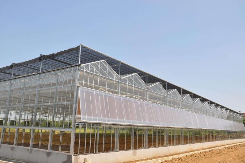 纹络型玻璃连栋温室大棚.jpg